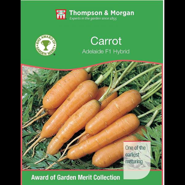 Carrot Adelaide F1