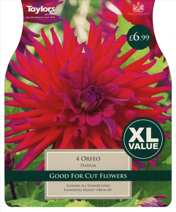 XL Value Dahlia Orfeo I