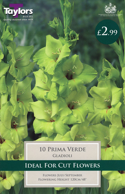 Gladioli Prima Verde