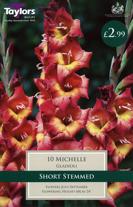 Gladioli Michelle 10-12