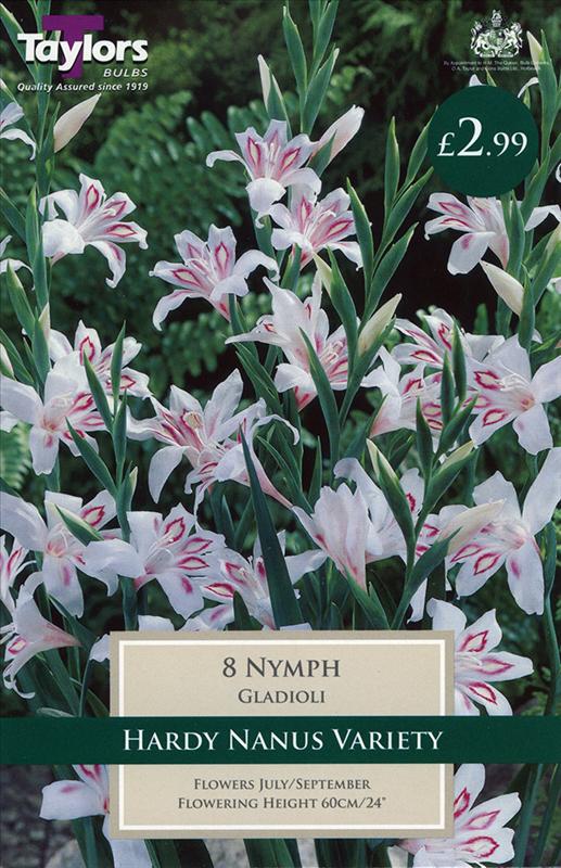 Gladioli Nymph 8Up
