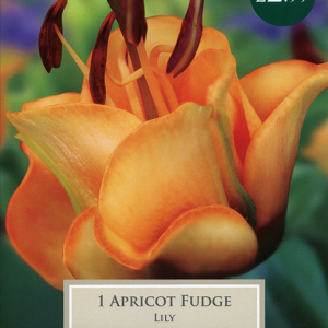 Exotic Lily Apricot Fudge
