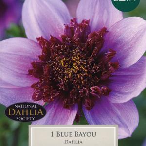 Coll & Ane Dahlia Blue Bay