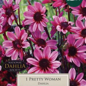 Dahlia Pretty