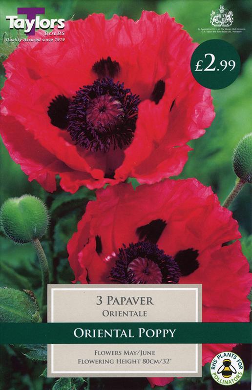 PP Cottage Garden Papaver