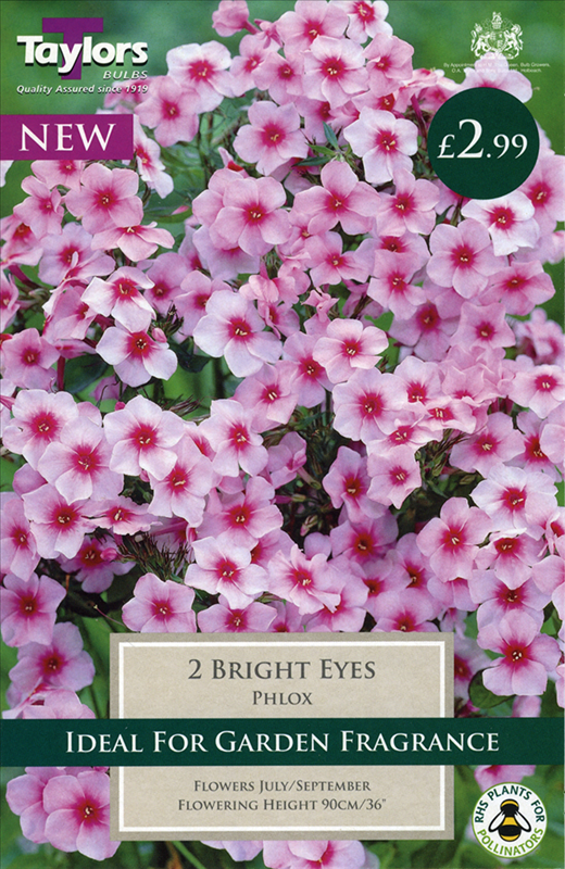Phlox Bright Eyes 1 P/P