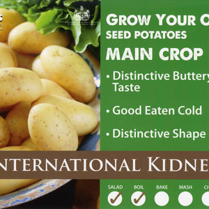 International Kidney  2kg
