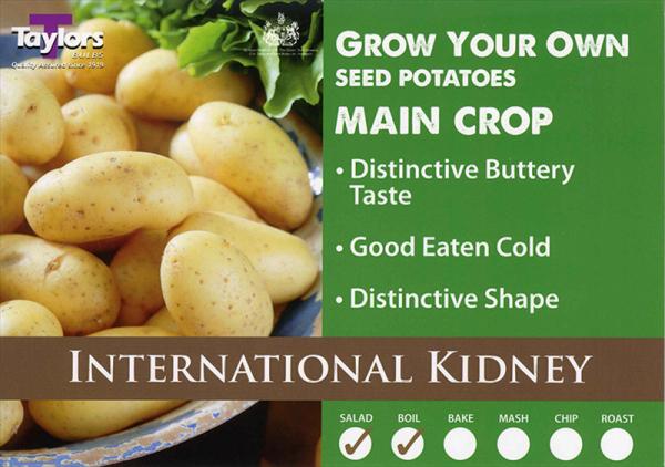 International Kidney  2kg