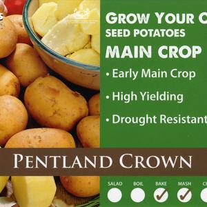 Pentland Crown  2kg
