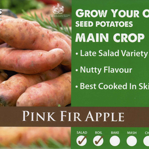 Pink Fir Apple  2kg