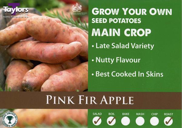 Pink Fir Apple  2kg