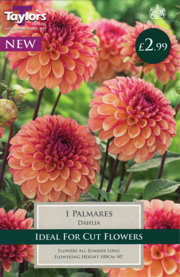 Dahlia Palmares