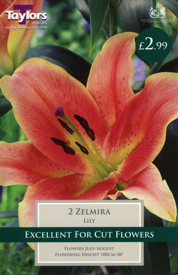 Oriental Lily Zel