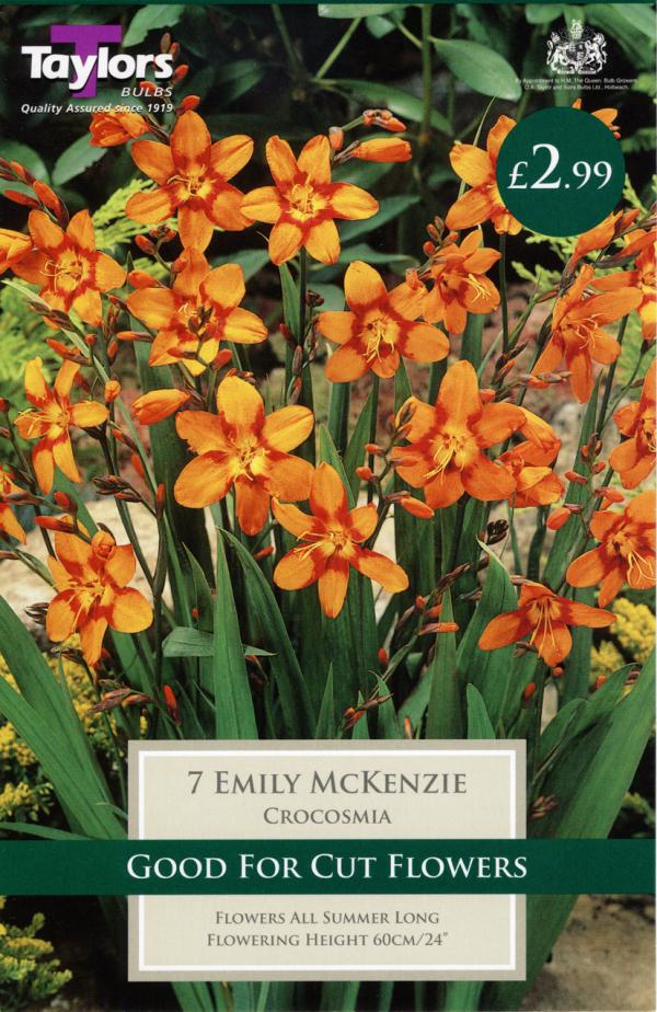 Crocosmia Emily Mackenzie 7Up