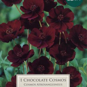 Cosmos Atros - Bee Friendly