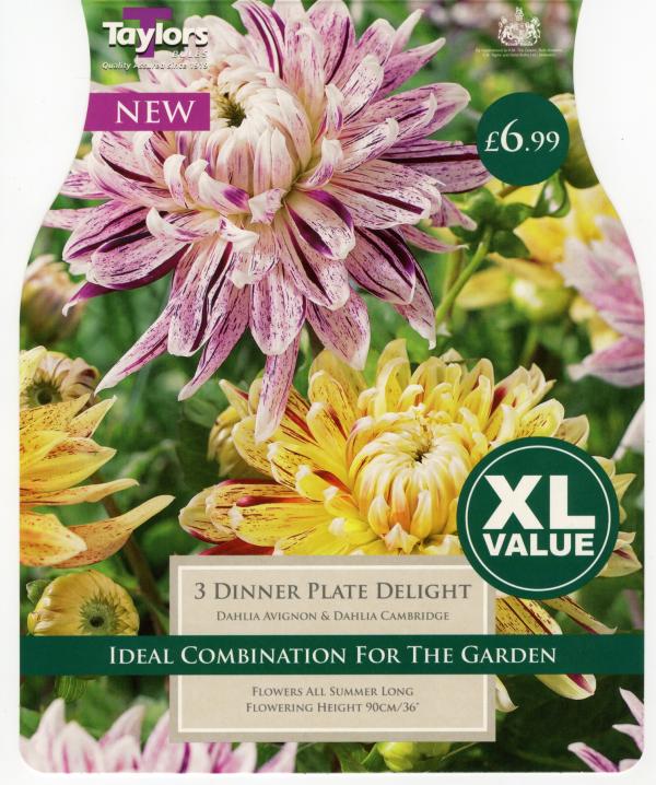 XL Dahlia Dinnerplate Del