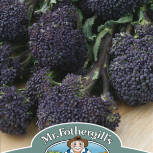 Broccoli (Sprouting) Summer purple