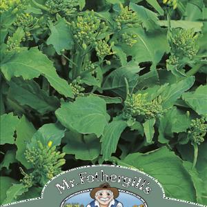 Broccoli Raab