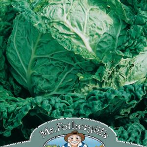 Cabbage (Savoy) Savoy King
