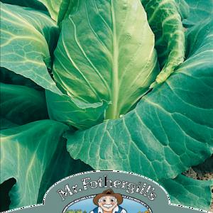 Cabbage Offenham 2 (Flower)