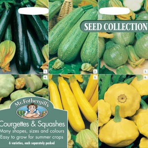 Courgettes & Summer Squash