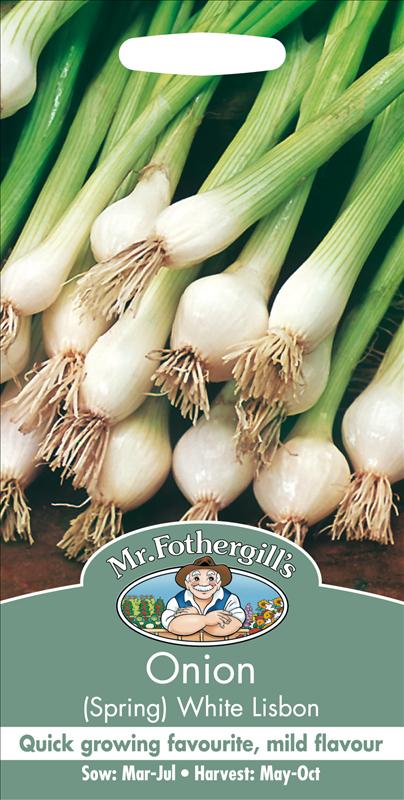 Onion White Lisbon
