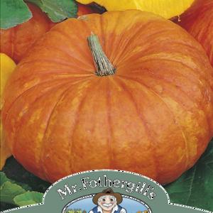 Pumpkin Rouge Vif D'Etampes