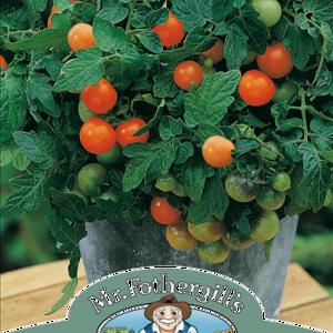 Tomato Garden Pearl