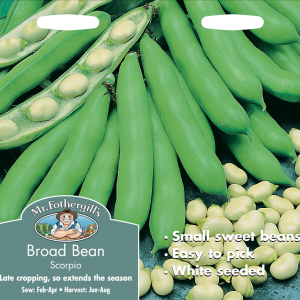 Broad Bean Scorpio