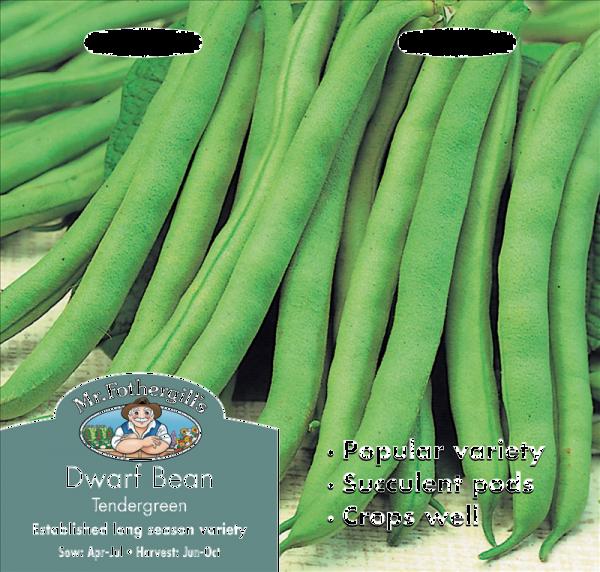 Dwarf French Bean Tendergreen
