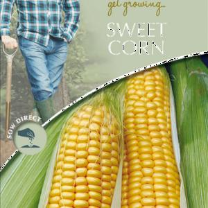 David Domoney Sweet Corn