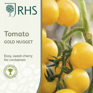 RHS Tomato Gold Nugget