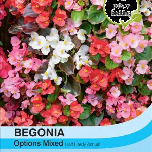Begonia Semperflorens Mixed