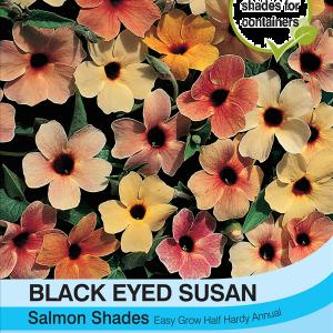 Black Eyed Susan Salmon Shades
