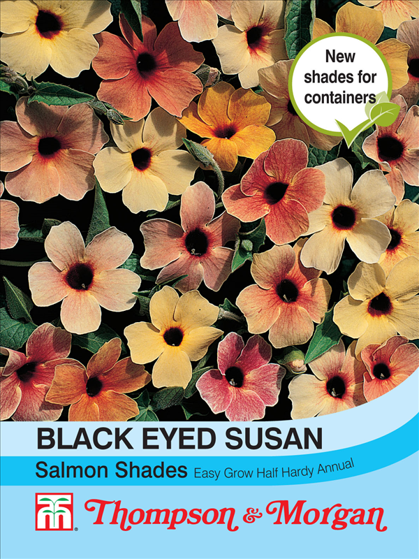 Black Eyed Susan Salmon Shades