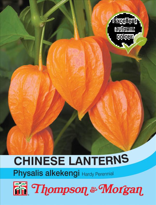 Chinese Lanterns Seeds