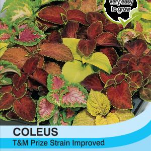 Coleus T&M Prize Strain Improved
