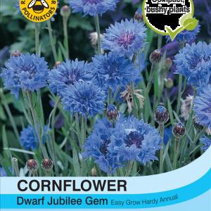 Cornflower Dwarf Jubilee Gem