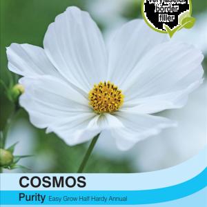 Cosmos Purity