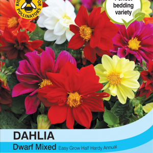 Dahlia Dwarf Mixed