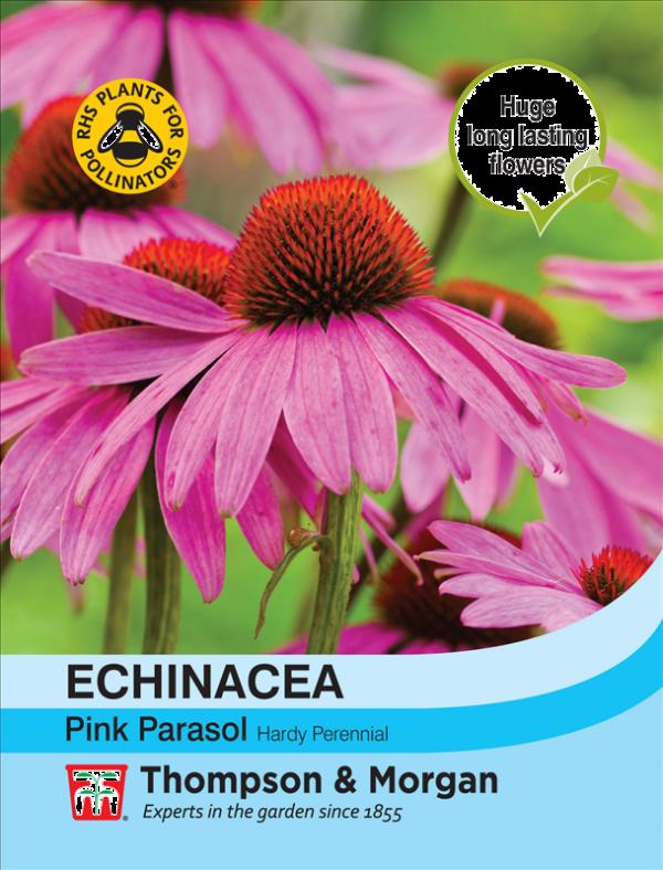 Echinacea Pink Parasol