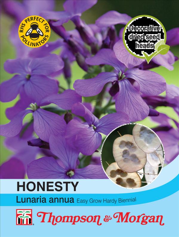 Honesty Seeds