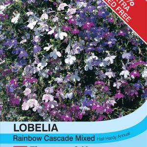 Lobelia Rainbow Cascade