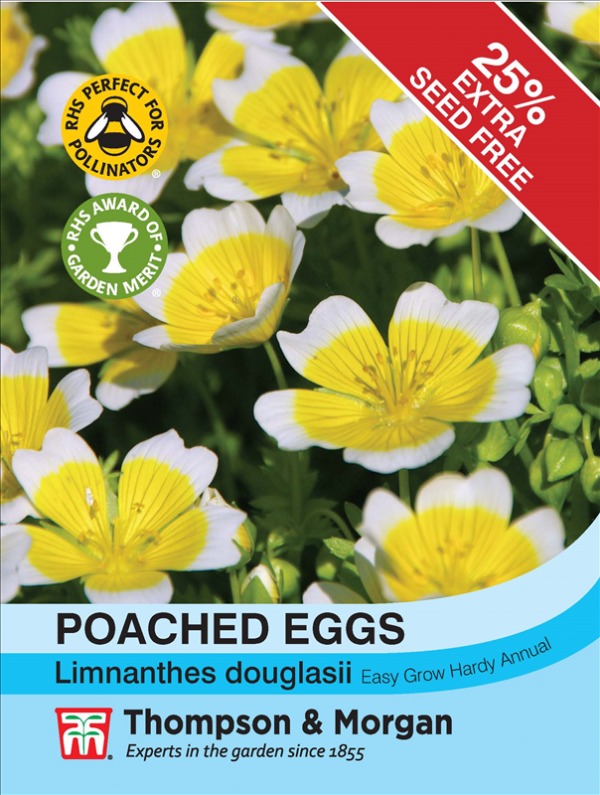 Poached Eggs Seeds