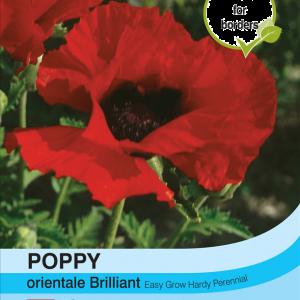Poppy Orientale Brilliant