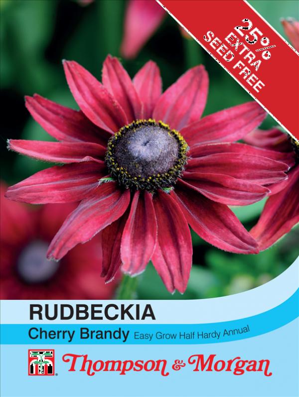 Rudbeckia Cherry Brandy