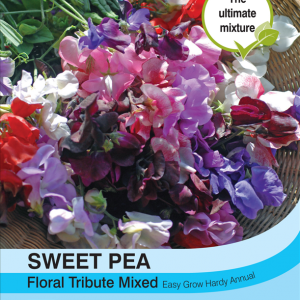 Sweet Pea Floral Tribute Mixed