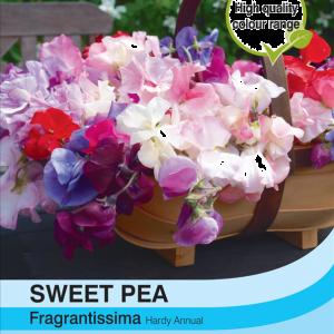 Sweet Pea Fragrantissima