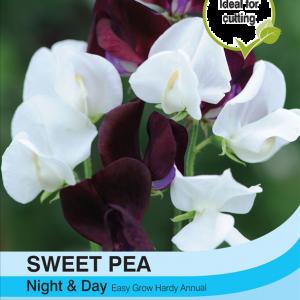 Sweet Pea Night & Day