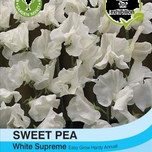 Sweet Pea White Supreme